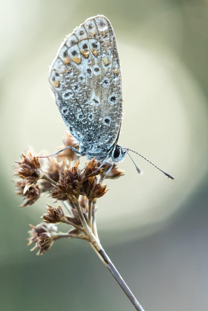 Insekten2