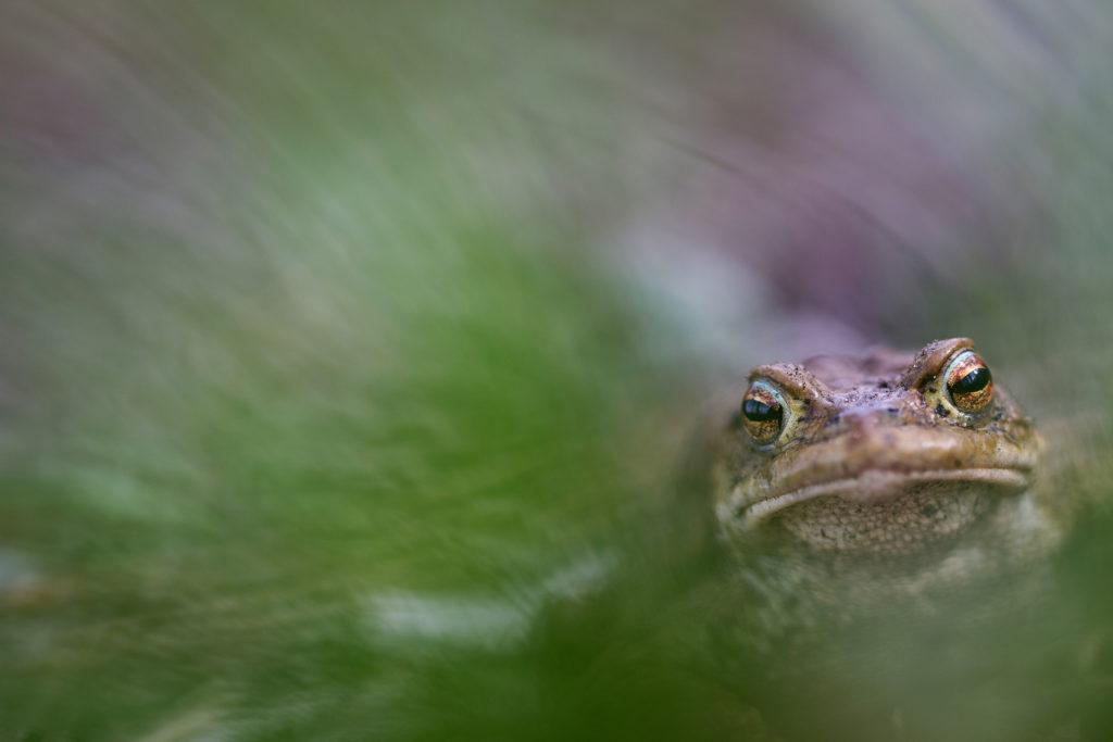 Amphibien2