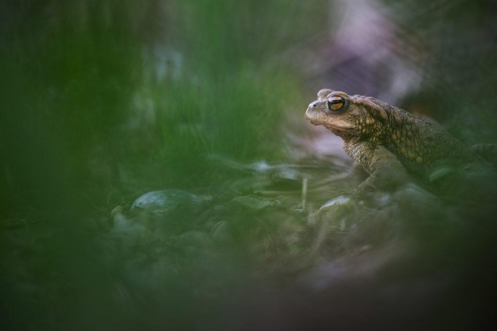 Amphibien3