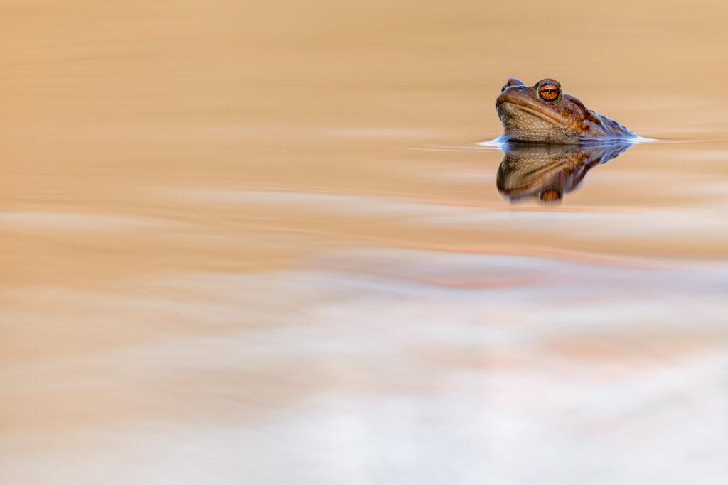 Amphibien8