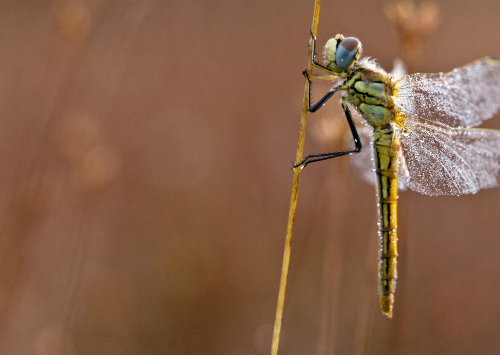 Insekten6