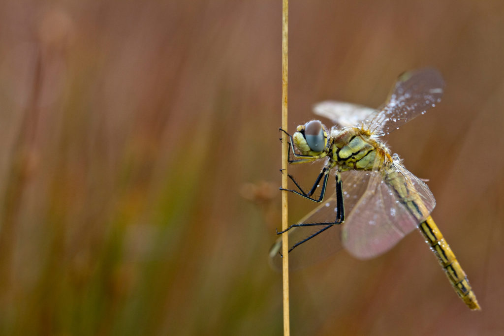 Insekten7