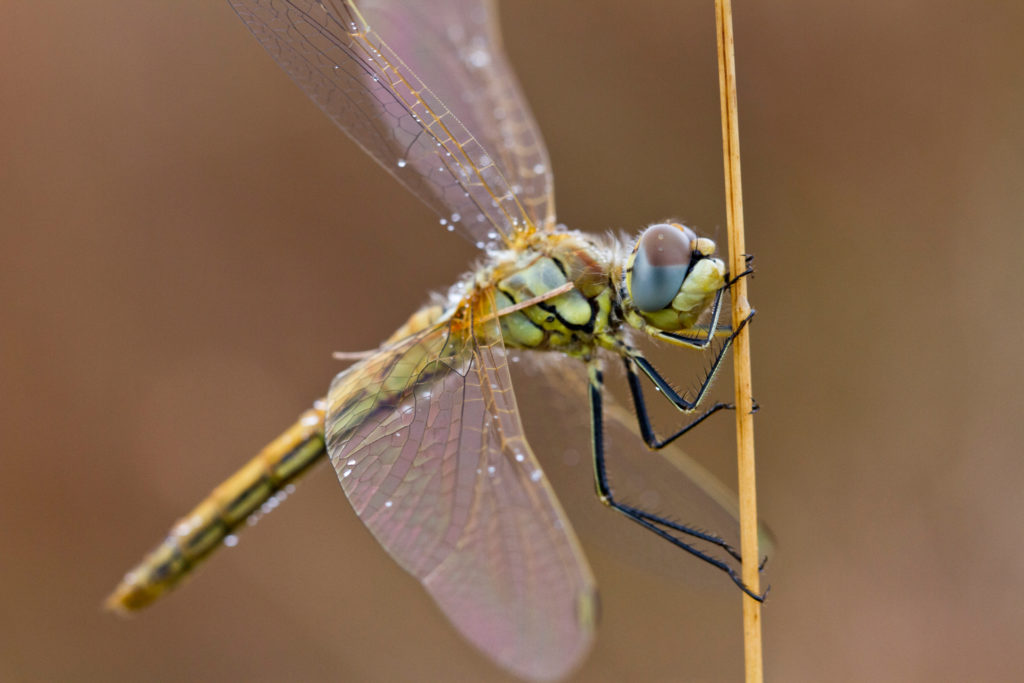 Insekten8