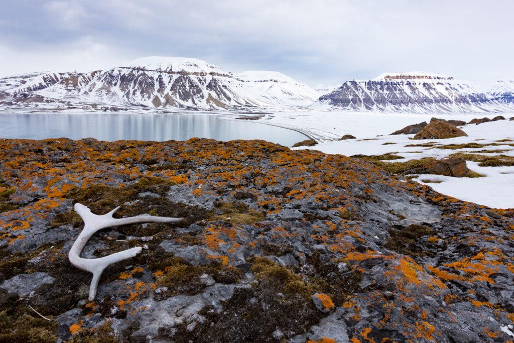 Spitzbergen2