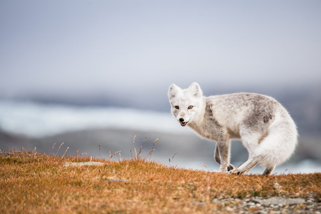Spitzbergen4