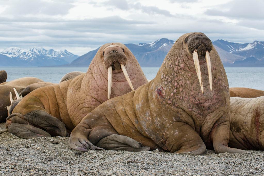 Spitzbergen6