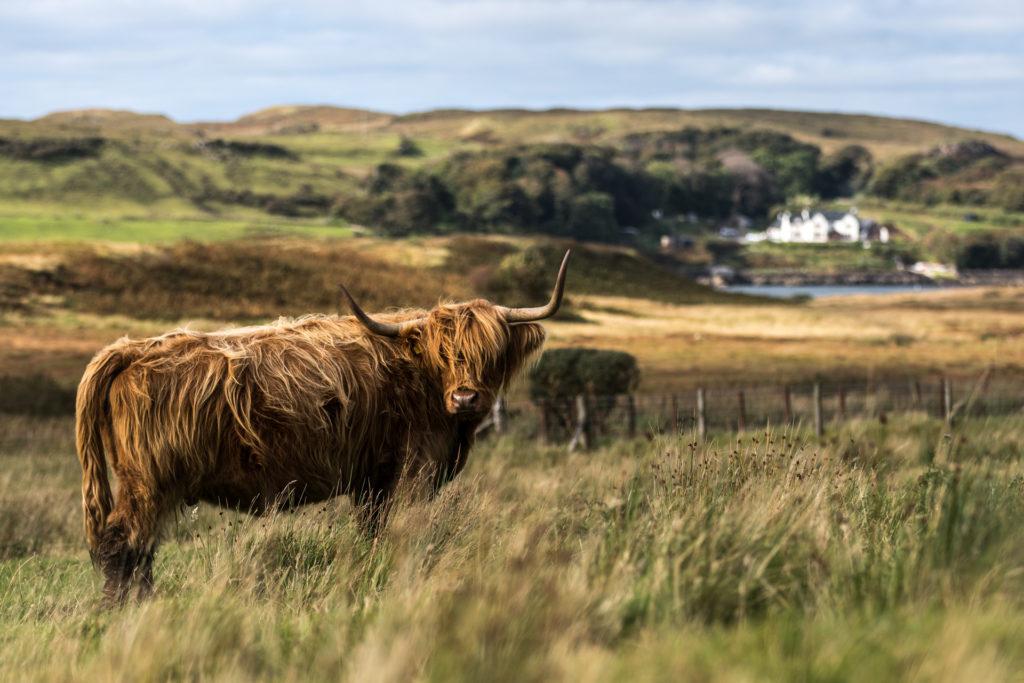 Schottland12